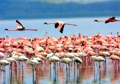 flamingos-lets-go-2-africa