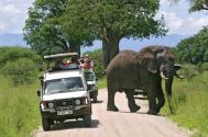 Safari Vehicle Alongside African Elephant